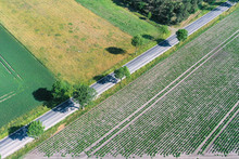 Abstract Looking Aerial View Of An Asphalted Country Road Running Diagonally Through The Picture Between Agricultural Areas And With Small Trees At The Roadside, Drone Shot