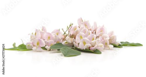 Photo Pink acacia blossom.