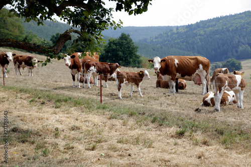 Fotomural Drought, Climate change, Dryness, Thuringia, Germany, Europe
