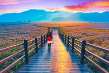 Tourists Watch The Sunrise At The Wooden Bridge Of Suncheon,South Korea.