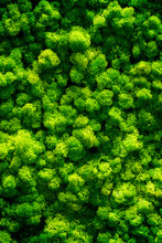 Green Moss On Old Office Floor...
