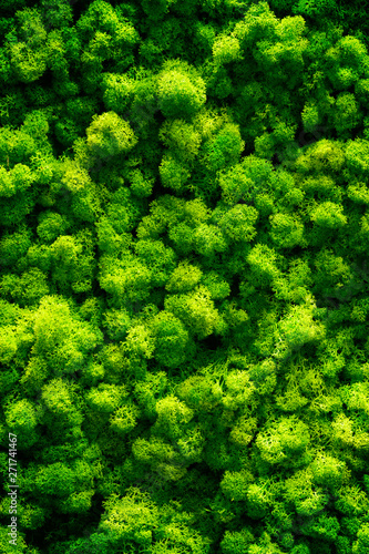 Green moss on old office floor. interior design. top view close up - 271741467