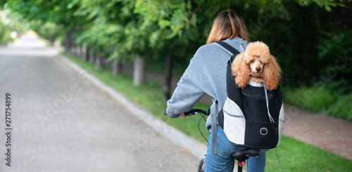 Cute dog peeking from animal carrying backpack .