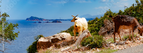 Sardinia, Italy, Arbatax - Two goats living in the wild seek their fodder on the steep coast at Pedra Longa, overlooking the sea at Arbatax, on a sunny, cloudless day in May Tapéta, Fotótapéta