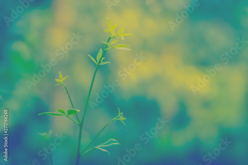 Cuadros en Lienzo soft  focus  green leaves  with bokeh light at sunrise  ,spring  nature wallpape