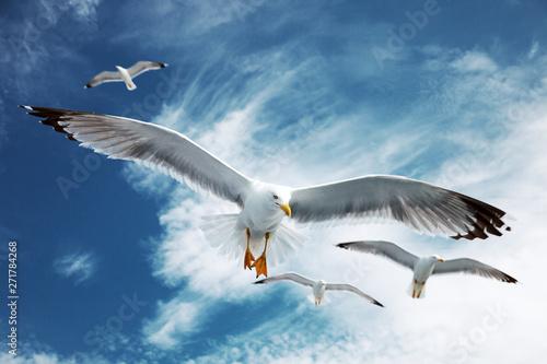 Pinturas sobre lienzo  Seagulls flying in the blue sky.