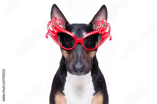 Photo sur Toile Chien de Crazy gay pride dog