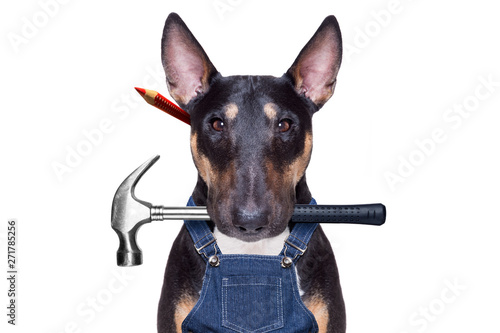Photo sur Aluminium Chien de Crazy handyman dog with tool in mouth
