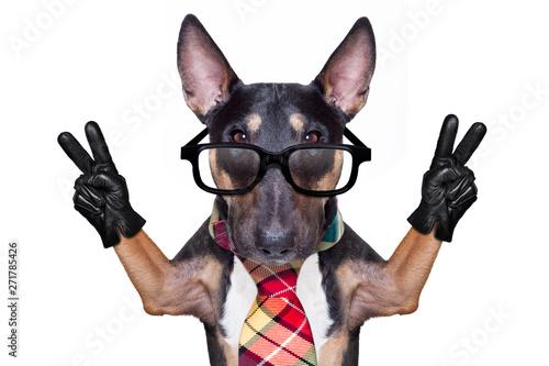 Photo sur Toile Chien de Crazy business boss dog