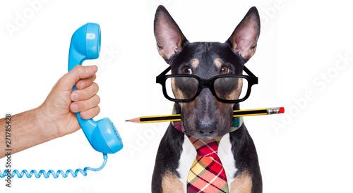 La pose en embrasure Chien de Crazy business boss dog