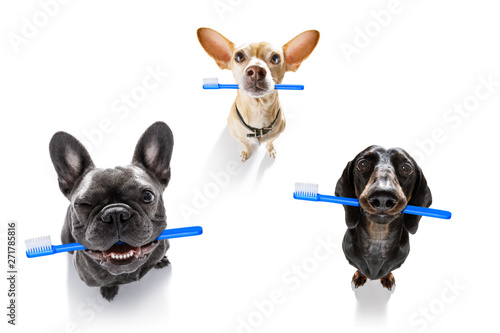 Photo sur Toile Chien de Crazy dental toothbrush row of dogs