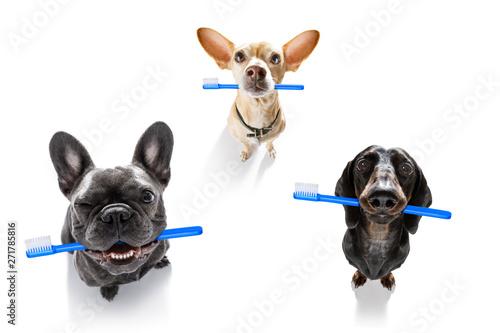 La pose en embrasure Chien de Crazy dental toothbrush row of dogs
