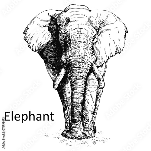 Hand drawn sketch style elephant isolated on white background Canvas Print