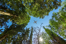 Airplane Above Trees