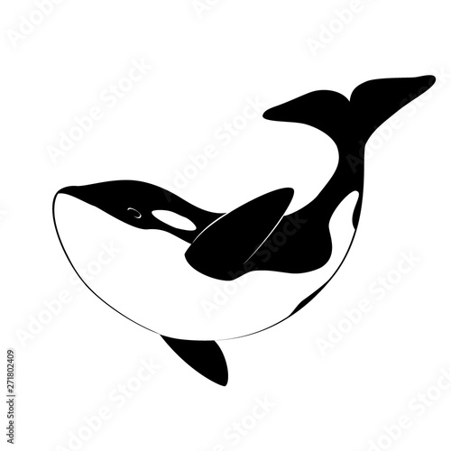 Fotografie, Obraz Isolated black silhouette of orca whale on white background
