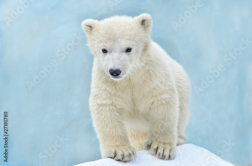 Recess Fitting Polar bear polar bear on white background