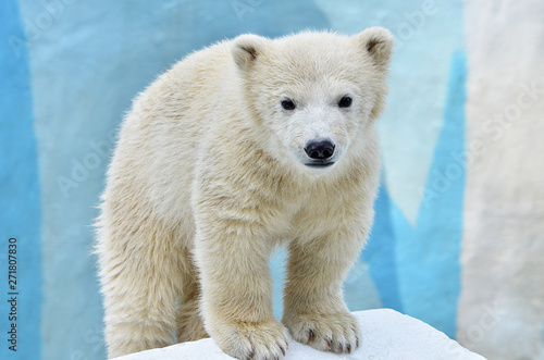 Photo Stands Polar bear polar bear