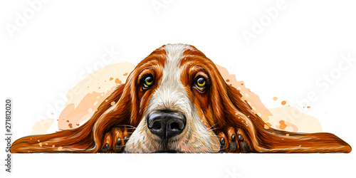 Tela Dog breed Basset Hound