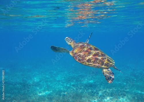 фотография  Sea turtle dives up to breath