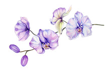 Beautiful Orchid Flowers On White Background. Flowers Isolated On White Background. Watercolor Painting. Hand Painted Botanical Illustration.