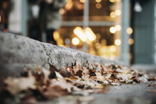 Autumn Leaves In The City