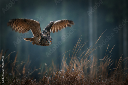 Eagle owl flying in the night forest Canvas-taulu