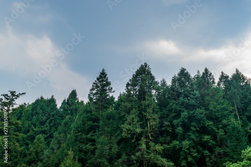 Acrylic Prints Forest Pine trees on blue sky