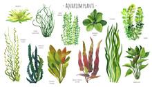 Aquarium Plants Watercolor Ill...