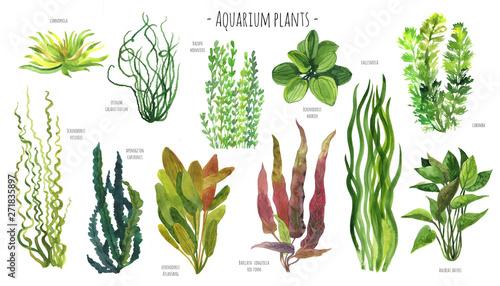 Fotografia Aquarium plants watercolor illustration set