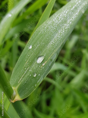 Poster Nature dew grass