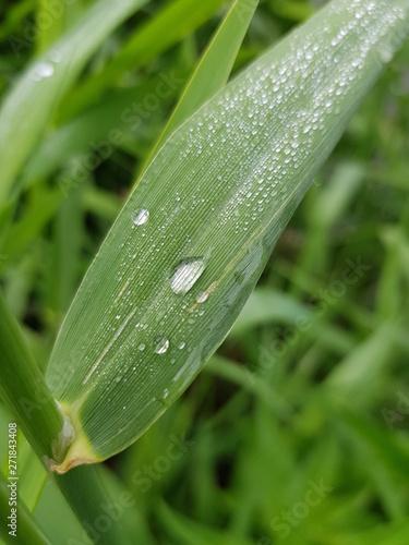 Fototapeten Natur dew grass