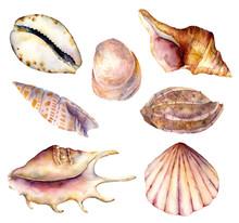 Watercolor Sea Shells Set. Han...