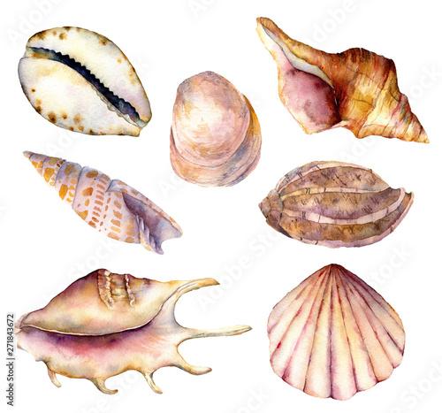 Fototapeta Watercolor sea shells set