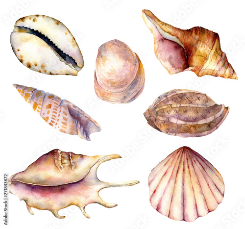 Obraz na płótnie Watercolor sea shells set