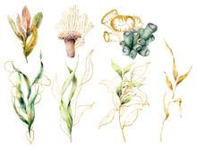 Watercolor Set With Laminaria ...