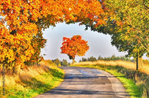 Fotobehang Oranje Maple trees with coloured leafs along asphalt road at autumn/fall daylight