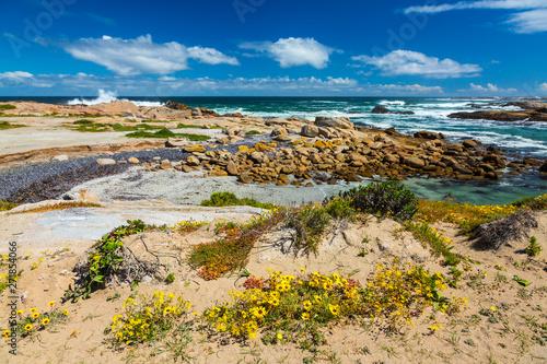 Cape Columbine Nature Reserve, West Coast Peninsula, Western Cape province, Sout Canvas-taulu