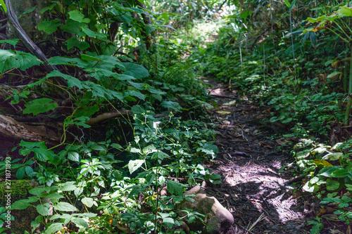 Photo 登山道と森の中の風景