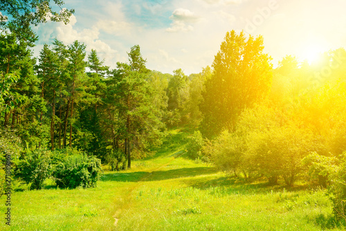 Fototapeta Natural forest with coniferous and deciduous trees, meadow and footpaths. In the blue sky there is a bright sun. obraz na płótnie