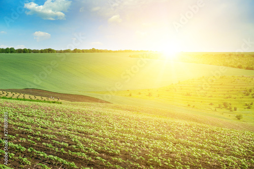 Foto auf AluDibond Gelb Schwefelsäure Green field and blue sky with light clouds. Above the horizon is a bright sunrise.
