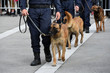 chien gendarme