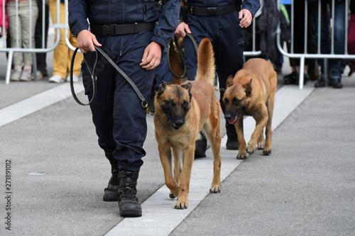 Obraz na plátně chien gendarme