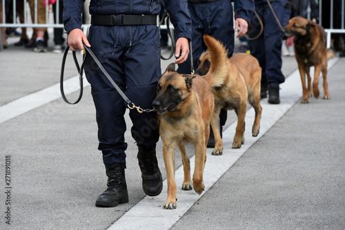Fotomural chien gendarme