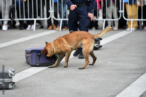 Canvas Print chien gendarme