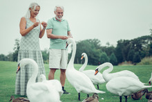 Joyful Positive Aged Couple Fe...
