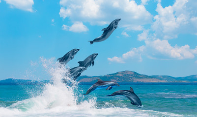 Fototapeta Delfin Group of dolphins jumping on the water - Beautiful seascape and blue sky