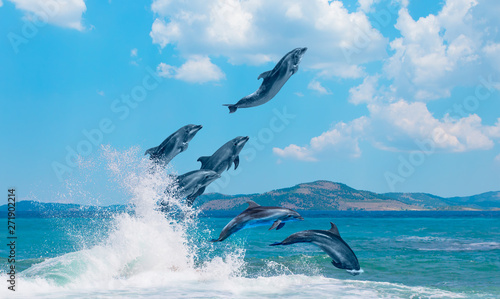Group of dolphins jumping on the water - Beautiful seascape and blue sky Wallpaper Mural