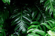 tropical rainforest green leaf image for home decoration