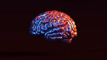 Silver Human Brain Anatomical ...