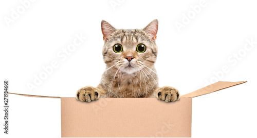La pose en embrasure Chat Portrait of a funny cat looking out of the box isolated on white background